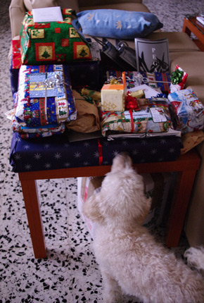 Gizmo is checking out the christmas gifts