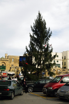 In Valletta they have a real Christmas tree