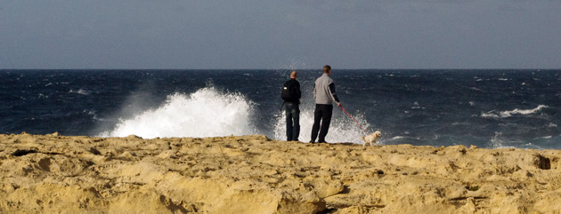Pelle, Kalle and Gizmo looking at the waves