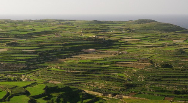 Terrace-cultivation are used everywhere in Malta and Gozo